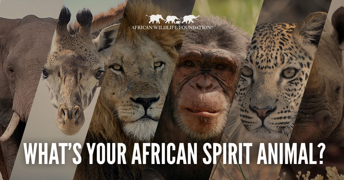 Whats Your African Spirit Animal